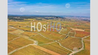 Vue Aérienne Si Le Vignoble à L'automne En Bourgogne Filmé Par Drone