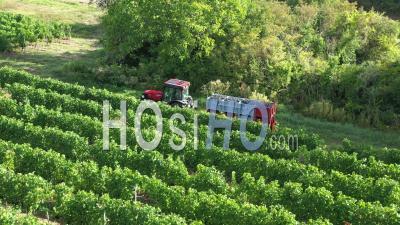 Récolte Dans Le Vignoble De Couchois - Séquence Vidéo Par Drone
