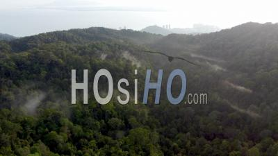 Aerial View Penang Hill Rainforest - Video Drone Footage