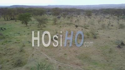 Rhinocéros Sur La Réserve Masai Mara - Vidéo Drone, Kenya.