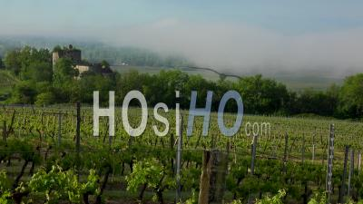 Vineyard And Old Castel In Sunrise And Fog, Landscape, Bordeaux Vineyard, Timelapse